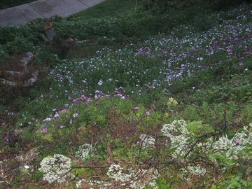 Flowers down the hill in front of house.