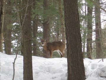 One of the many creatures we saw while snowshoeing