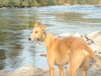 "Our Greyhound ""Rogue"" on the Rogue River invites you to enjoy his Retreat!"