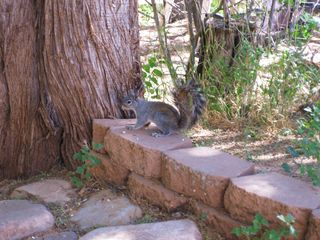 Payson condo photo - Morning guests