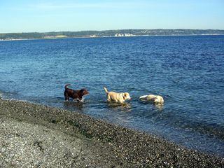 Coupeville house photo - Dogs are welcome and love playing in the ocean!