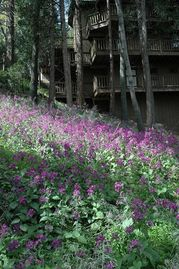Crestline chalet rental - Spring flowers as seen from back of vacation home.