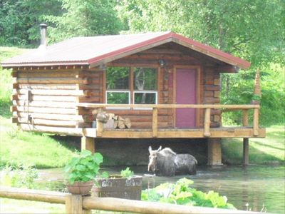Moose in the pond by Cabin #1