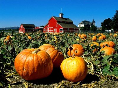 Fall - Pumpkin & apple picking, hay rides & farm tours, festivals, wineries