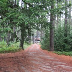 Kezar Lake cottage photo - Driveway / walk to beach