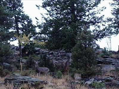 Deer and Rock formations behind Pinecone Cottage