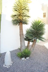 Our great desert landscaped garden