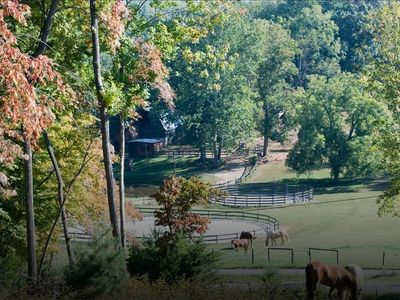 ~Overlooking Willow Pond Stables~