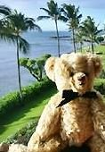 VRBO Bear enjoying the lanai