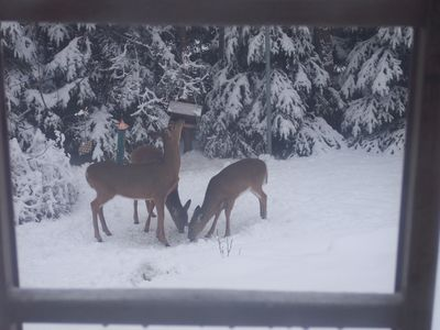 Winter Deer Raiding the Bird Feeder