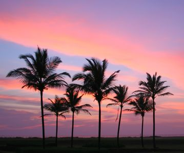 The magic of palm trees against the sunset