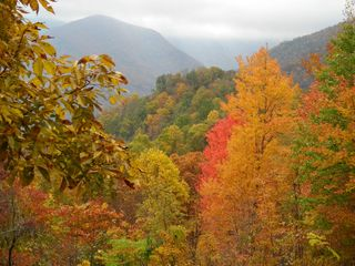 Maggie Valley cabin photo - Colors explode in the Fall, view from Cataloochee!
