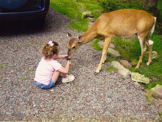 Lulu the deer greets our little guest.... - Tannersville house vacation rental photo