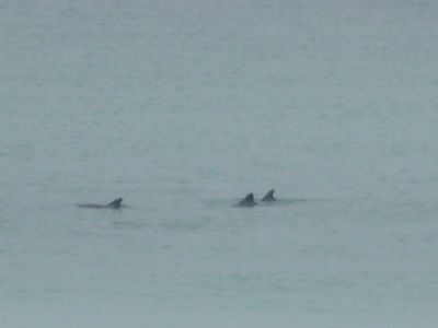 Dolphins from deck