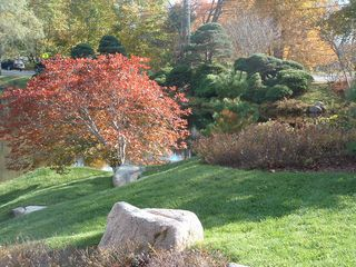 Acadia National Park cottage photo - Azalea gardens at Asticou in October - 3.5 miles away