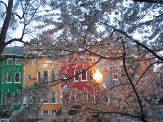 Woodley Park condo photo - Chez Aimee street through the cherry blossom tree
