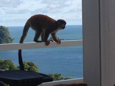 Incredible Ocean Views, Private Pool, Jacuzzi and Monkey Visitors Daily!!!