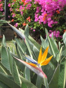 Beautiful tropical flowers abound on our colorfully landscaped property.