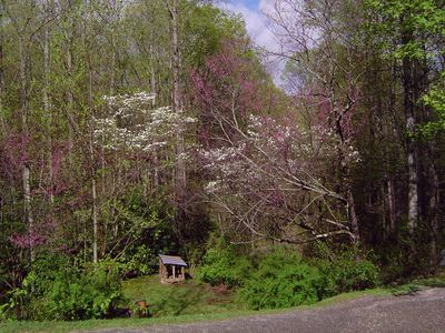 Red Buds and Dog Woods overlook firepit