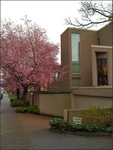 Side view of the front exterior with flowering trees.