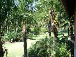 Tampa house photo - View of Exotic Palms that cover the 5 acre estate