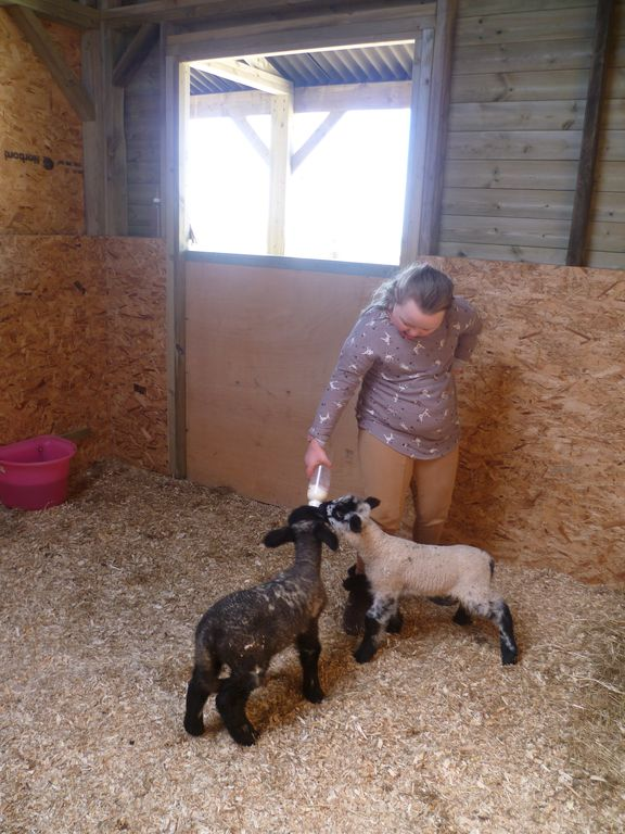 April 2012 help bottle feeding lambs!
