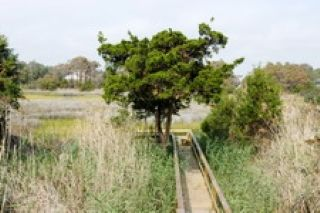 Oak Island house rental - Dock