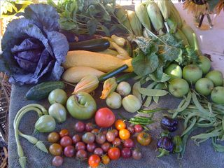 Healdsburg house photo - The bounty from our organic gardens.