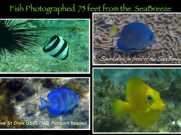 I made these photographs just in front of the SeaBreeze while snorkeling