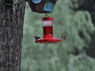 Roan Mountain house photo - Why we call it Hummingbird Meadow