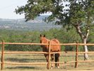 Horses may be grazing in the fenced ranch pastures.