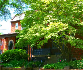 The Dogwood tree shading your front yard!