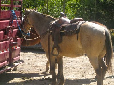 Horseback riding at the Red River Stables