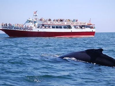 Whale Watching in Cape May