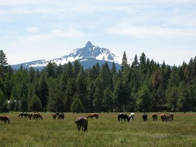 Black Butte Meadow with horses