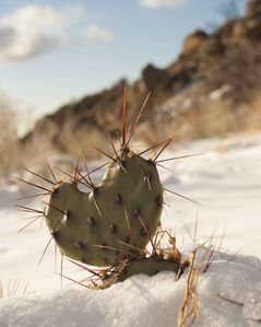 You never know what wonderful surprises you find hiking the Sandia foothills.
