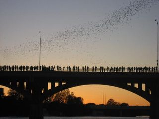 Austin house photo - Watch the bats fly from under the Congress Bridge - 1.5 miles away from rental