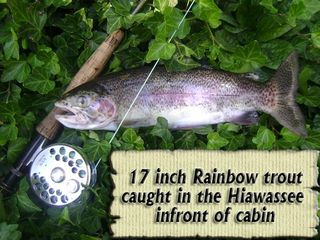Hayesville cabin photo - Beautiful fish.