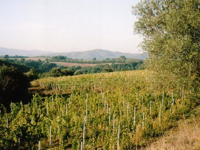 Pitigliano house rental - Wineyard SAN PIETRO