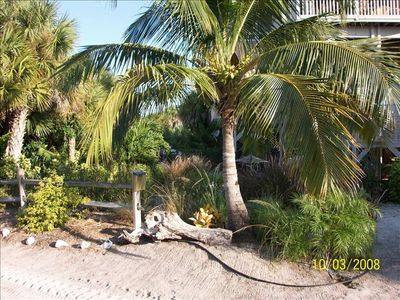 The front yard with coconut palm