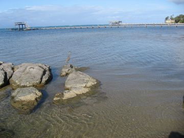 Rocks close to our dock are resting place to many different waterbirds.