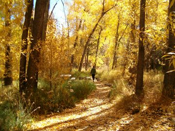 Great hiking trails nearby down Taos Canyon- South Boundary Trail