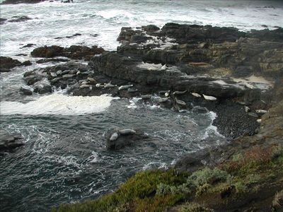 Sea Ranch house rental - MARINE PRESERVE/HARBOR SEALS