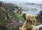 VRBO Bear taking in the views of Dana Point Harbor