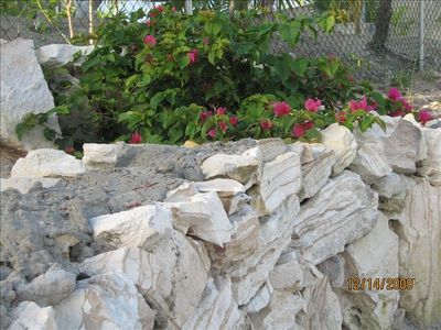 North Caicos villa rental - Local flora gently creeping on a stone wall in the backyard.