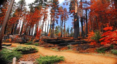 Fall Colors,Deer Hunters & Winter Fun  in the Dells at Christmas Mountain