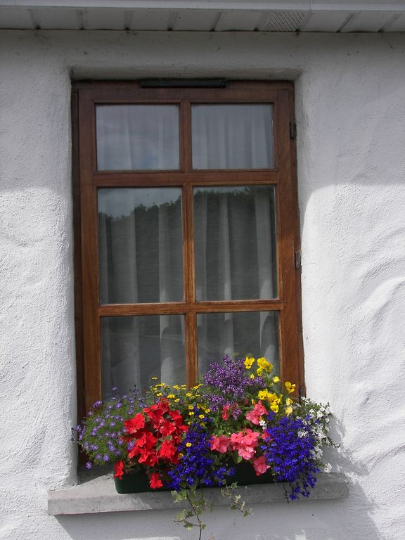 Our Summer Window Boxes
