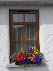 County Mayo house photo - Our Summer Window Boxes