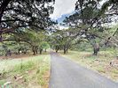 Driveway - Explore native Hill Country greenery in your own front yard.