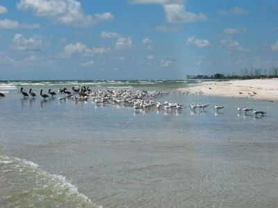 Wading pelicans and seabirds on yet another beautiful quiet white sand beach
